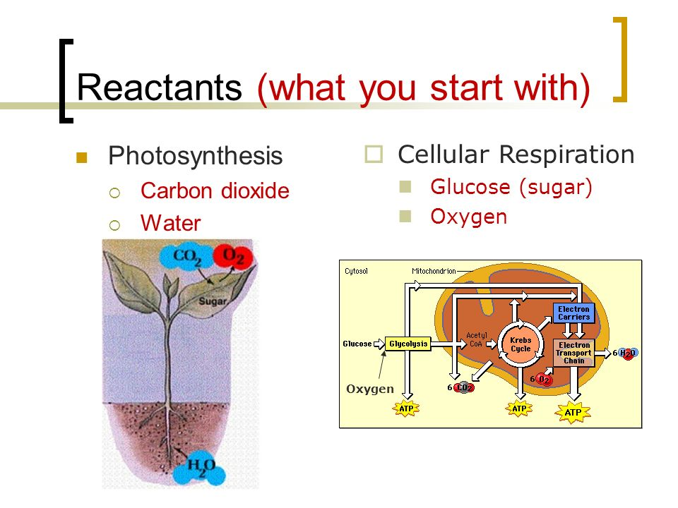 Reactants (what you start with)