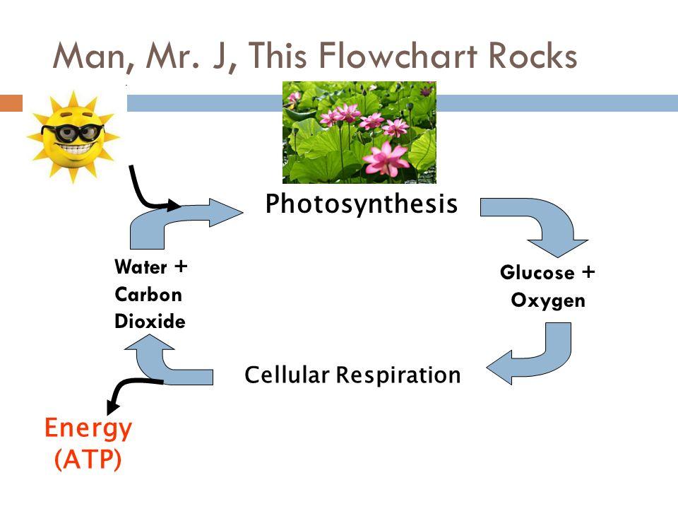 Cellular Respiration Catalyst Ppt Video Online Download