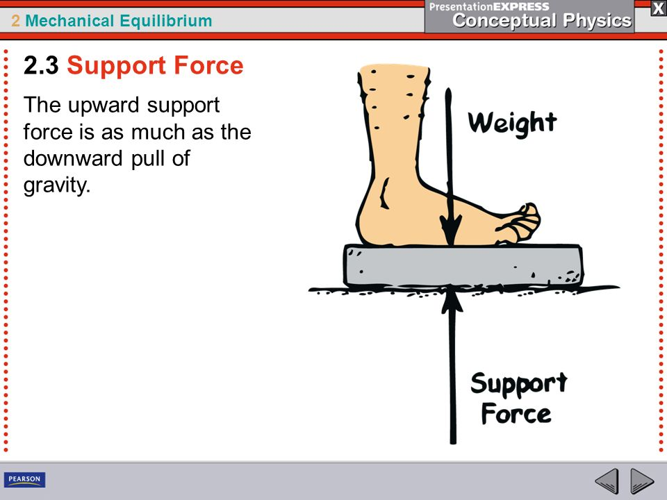 2.3 Support Force The upward support force is as much as the downward pull of gravity.