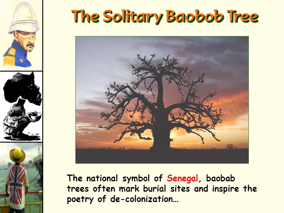 The Solitary Baobob Tree