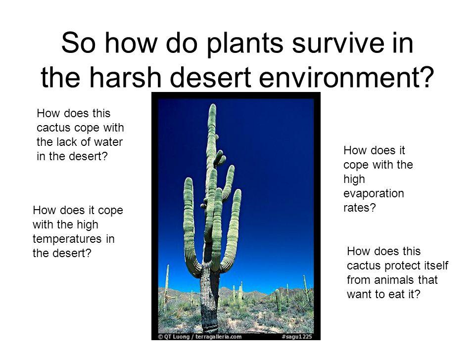 So How Do Plants Survive In The Harsh Desert Environment