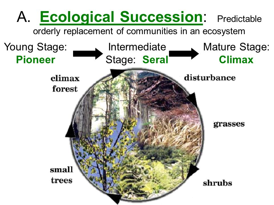 how does human ecology shape the main Skip to main | skip to sidebar human ecology how can ecological models be applied to humans in our environments, natural, urban, and social we are human, but that does not mean that we are not animal also when ecologists look at patches of forest habitat for birds, or insect communities.