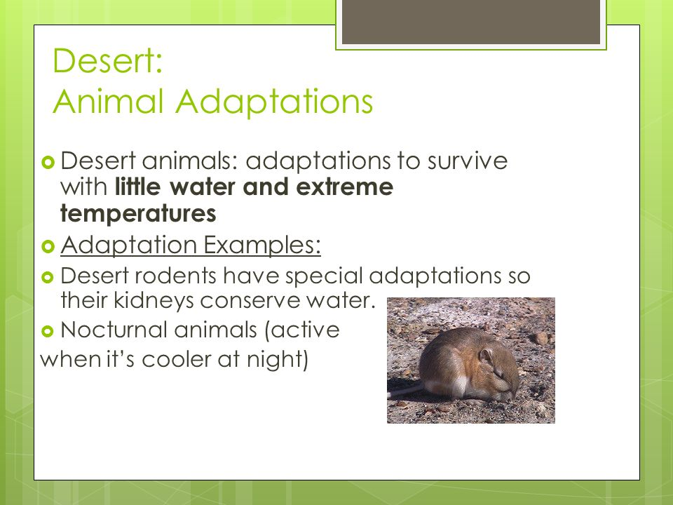 Biome Adaptations Niches Ppt Video Online Download