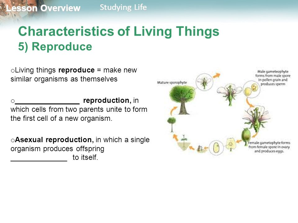 What Characteristics Do All Living Things Share Know Ppt Video