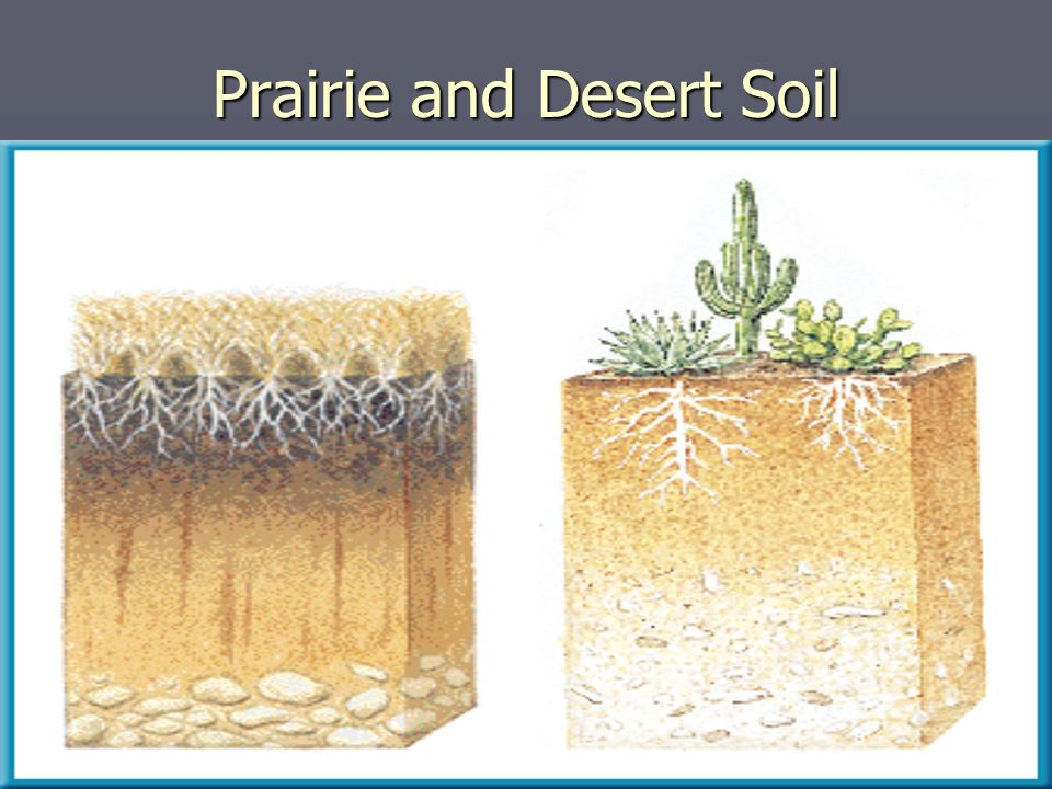Prairie and Desert Soil