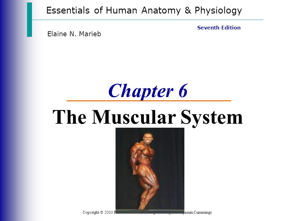 Chapter 6 The Muscular System - ppt video online download