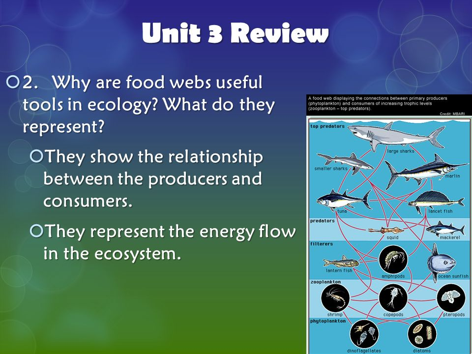 3 unit 3 review 2 why are food webs