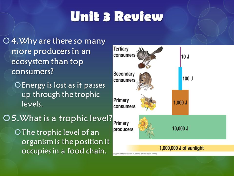 unit 3 review 5 what is a trophic level