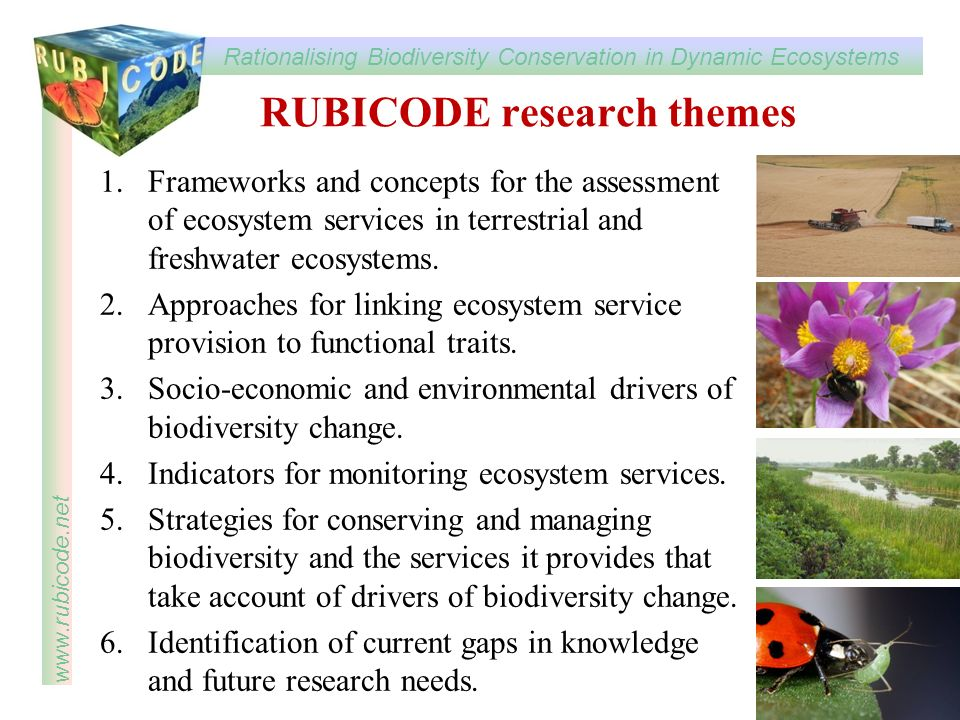 RUBICODE research themes
