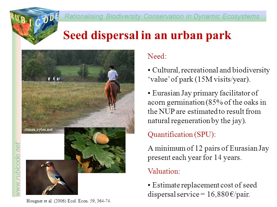 Seed dispersal in an urban park