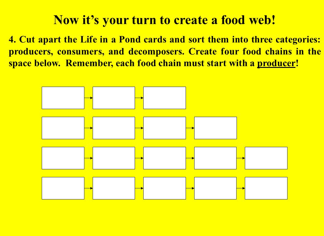 Now it's your turn to create a food web!