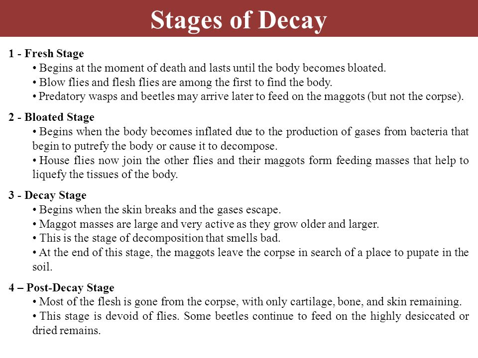 Stages of Decay 1 - Fresh Stage