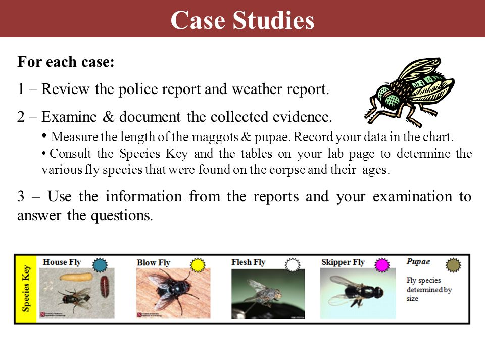 Case Studies For each case:
