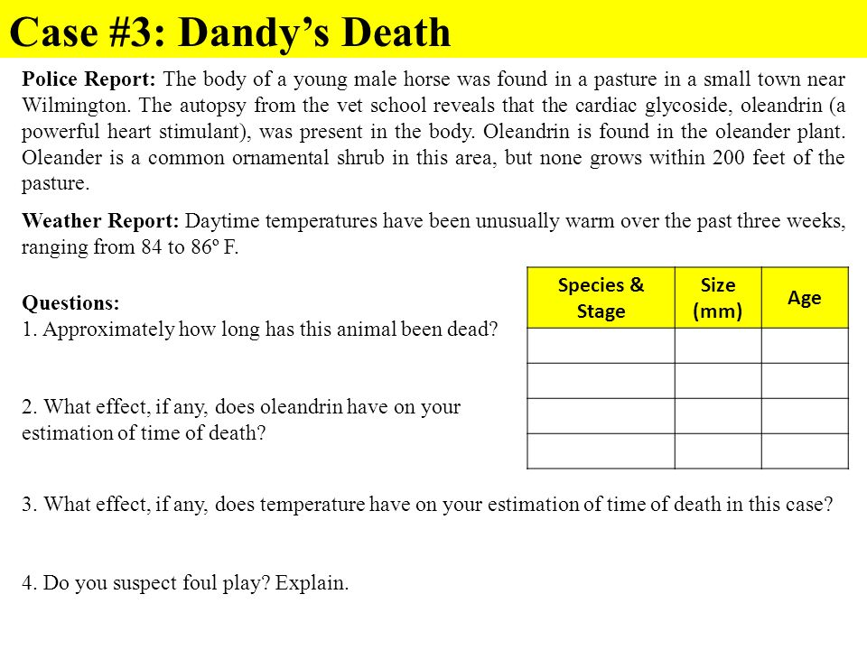 Case #3: Dandy's Death