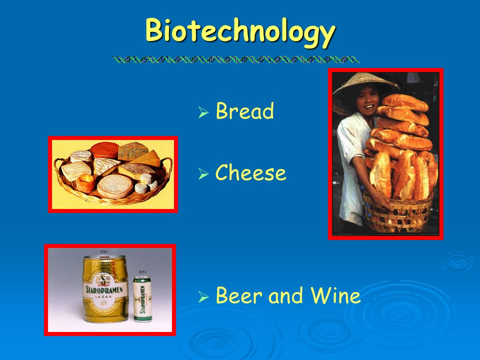 Biotechnology Bread Cheese Beer and Wine