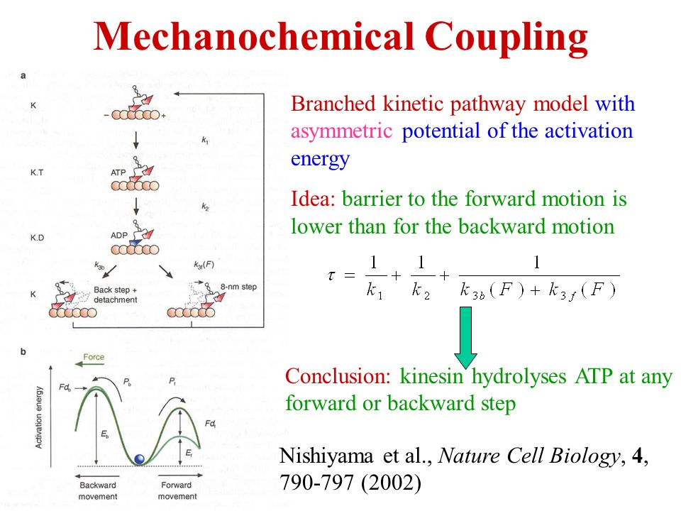 Energy Coupling and Molecular Motors