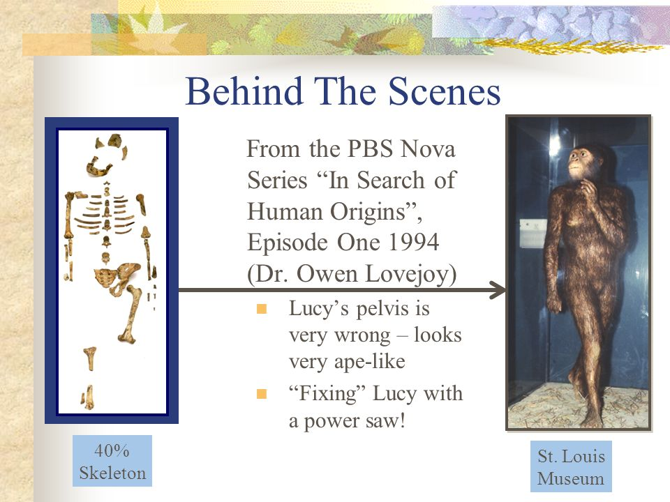 Behind The Scenes From the PBS Nova Series In Search of Human Origins , Episode One 1994 (Dr. Owen Lovejoy)