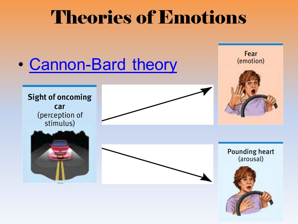 3 what is the cannon bard theory of emotion