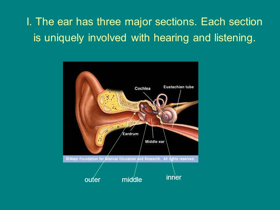 I. The ear has three major sections