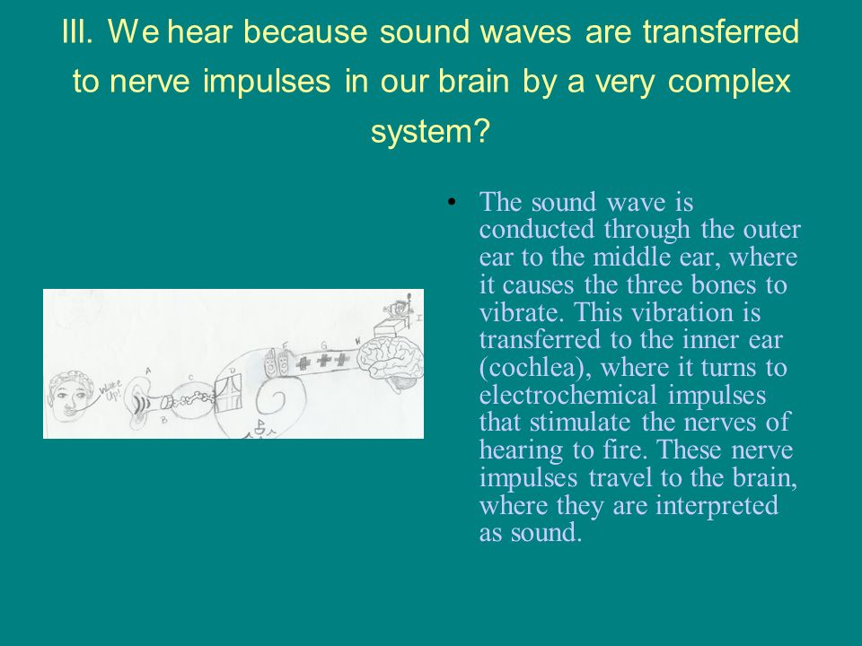 III. We hear because sound waves are transferred to nerve impulses in our brain by a very complex system