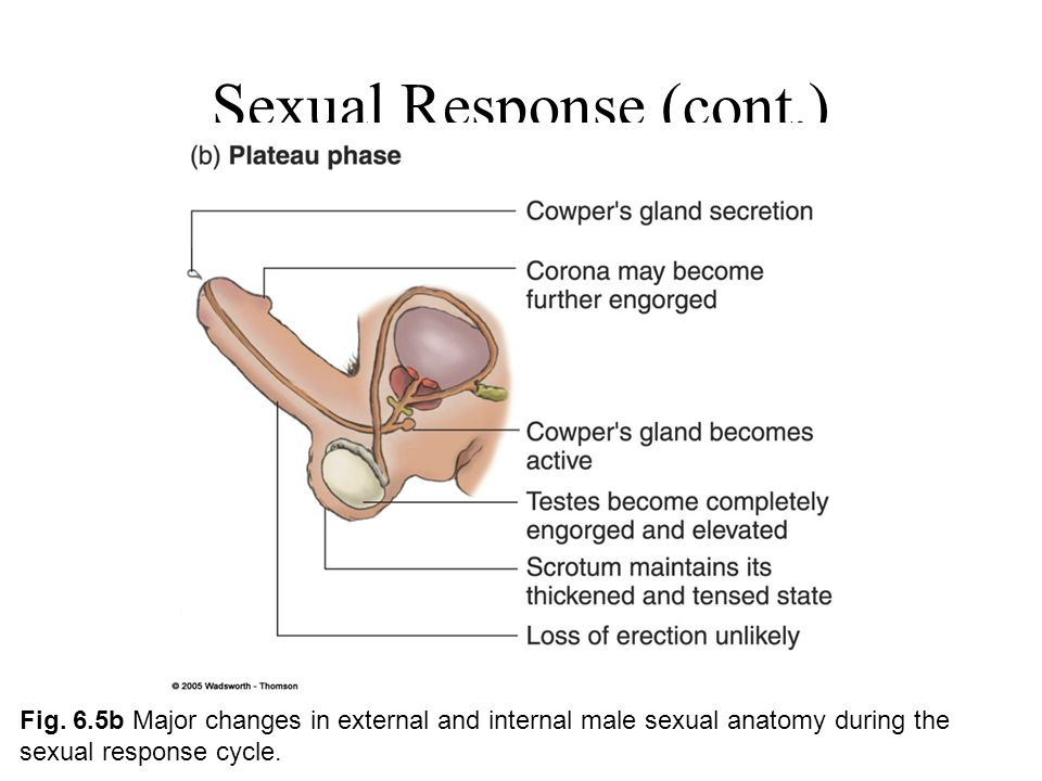 Internal secretion sex