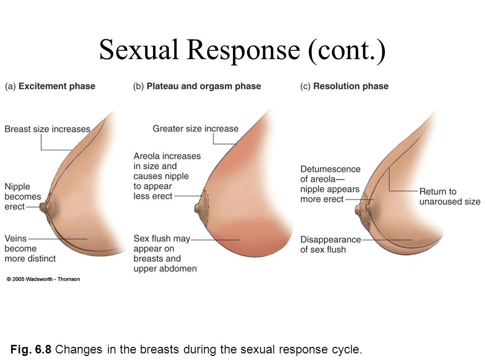 Increased breast size during sex