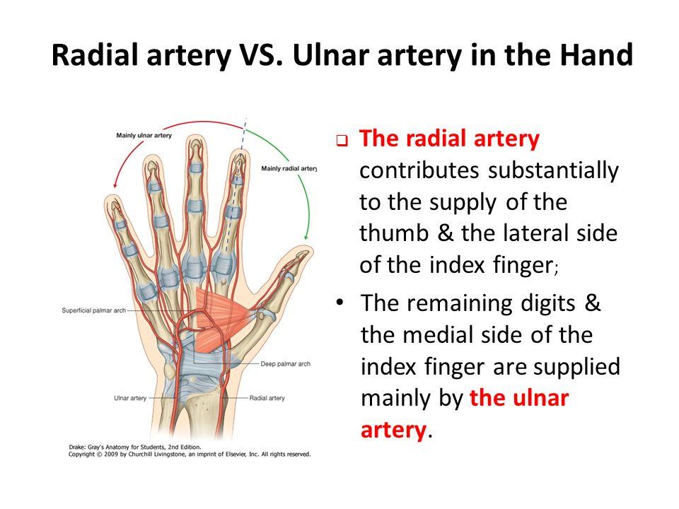 The Hand Dr Idara C. Eshiet. - ppt download