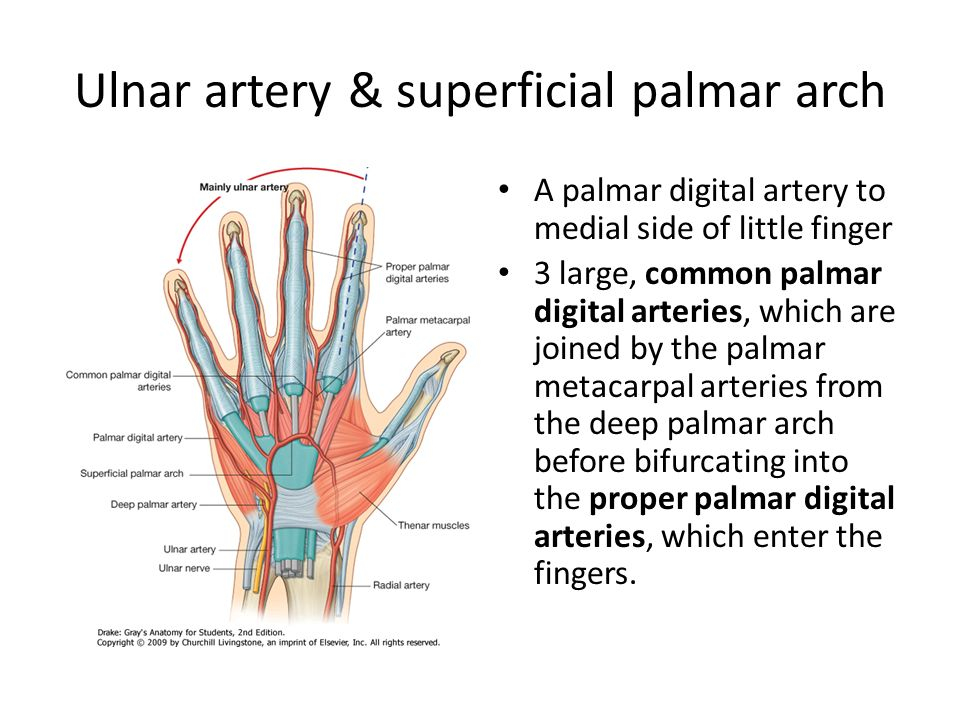 The Hand Dr Idara C. Eshiet. - ppt download