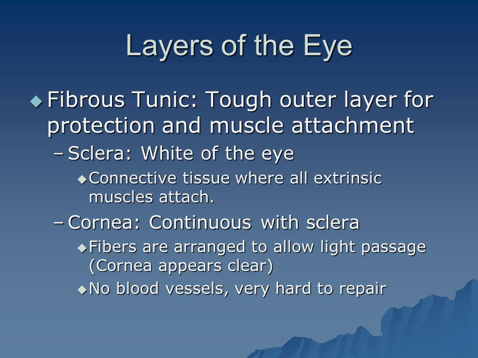 Layers of the Eye Fibrous Tunic: Tough outer layer for protection and muscle attachment. Sclera: White of the eye.