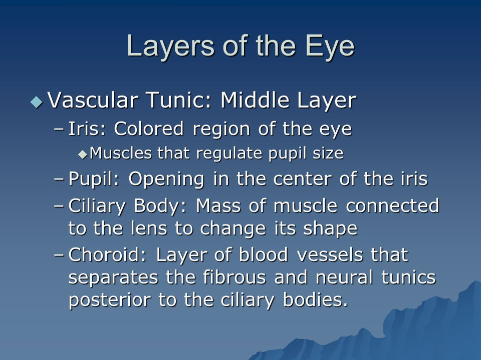 Layers of the Eye Vascular Tunic: Middle Layer