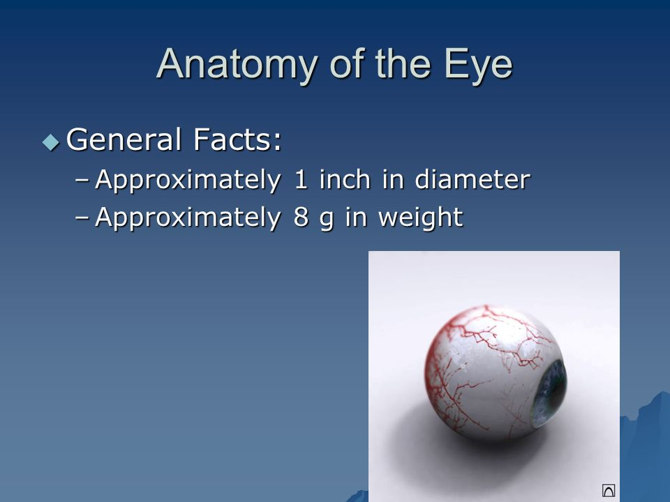 Anatomy of the Eye General Facts: Approximately 1 inch in diameter