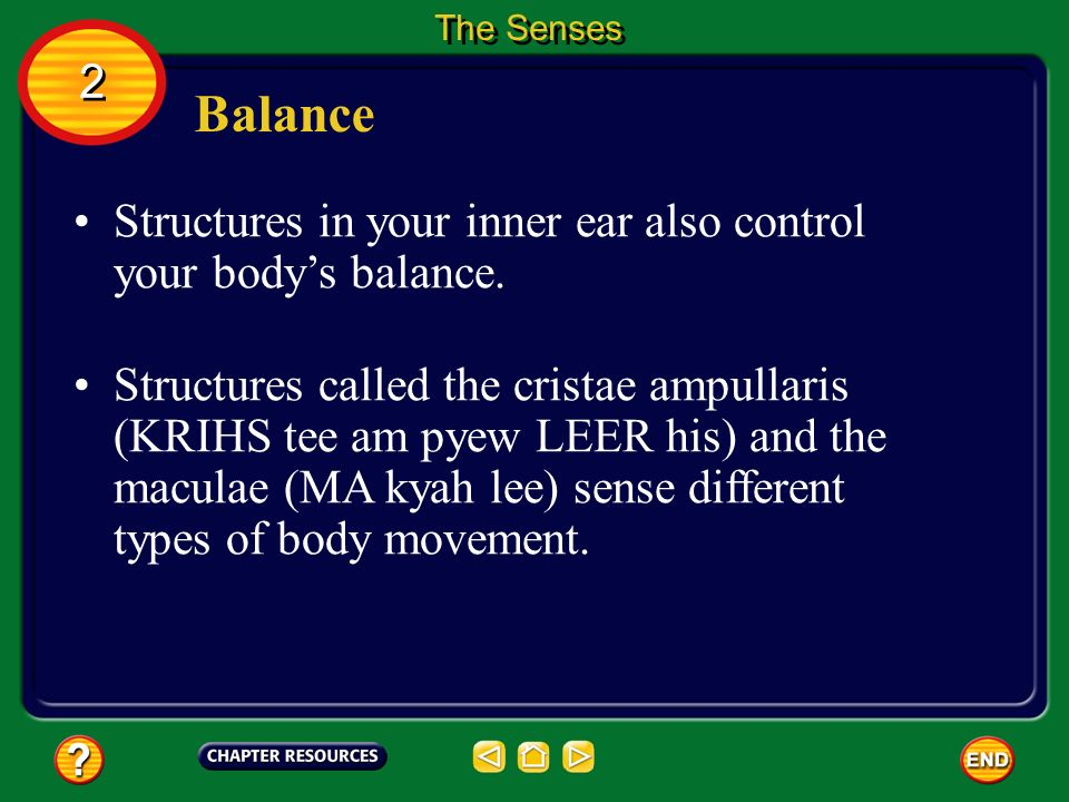The Senses 2. Balance. Structures in your inner ear also control your body's balance.