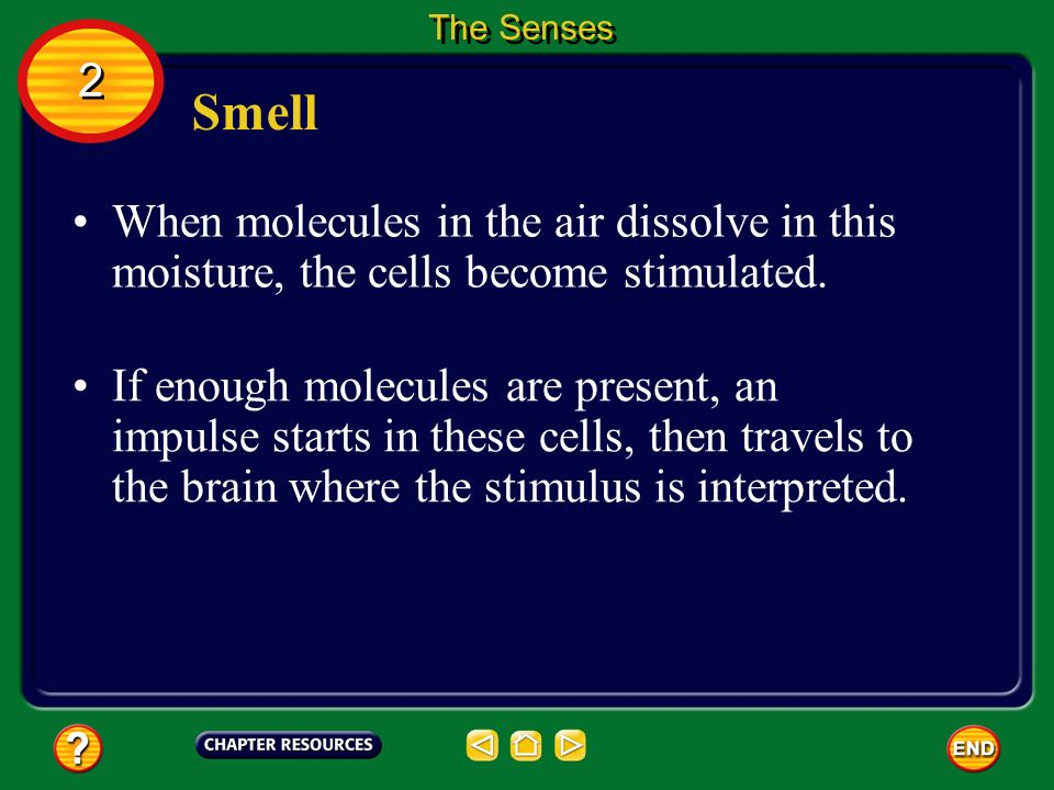 The Senses 2. Smell. When molecules in the air dissolve in this moisture, the cells become stimulated.