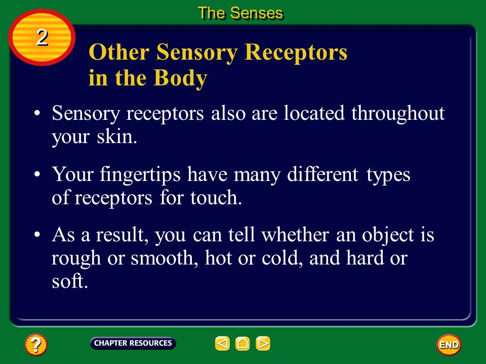 Other Sensory Receptors in the Body