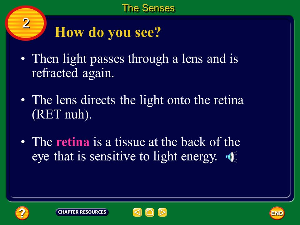 The Senses 2. How do you see Then light passes through a lens and is refracted again. The lens directs the light onto the retina (RET nuh).