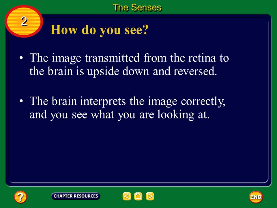 The Senses 2. How do you see The image transmitted from the retina to the brain is upside down and reversed.