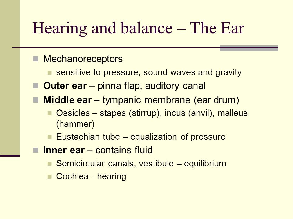 Hearing and balance – The Ear