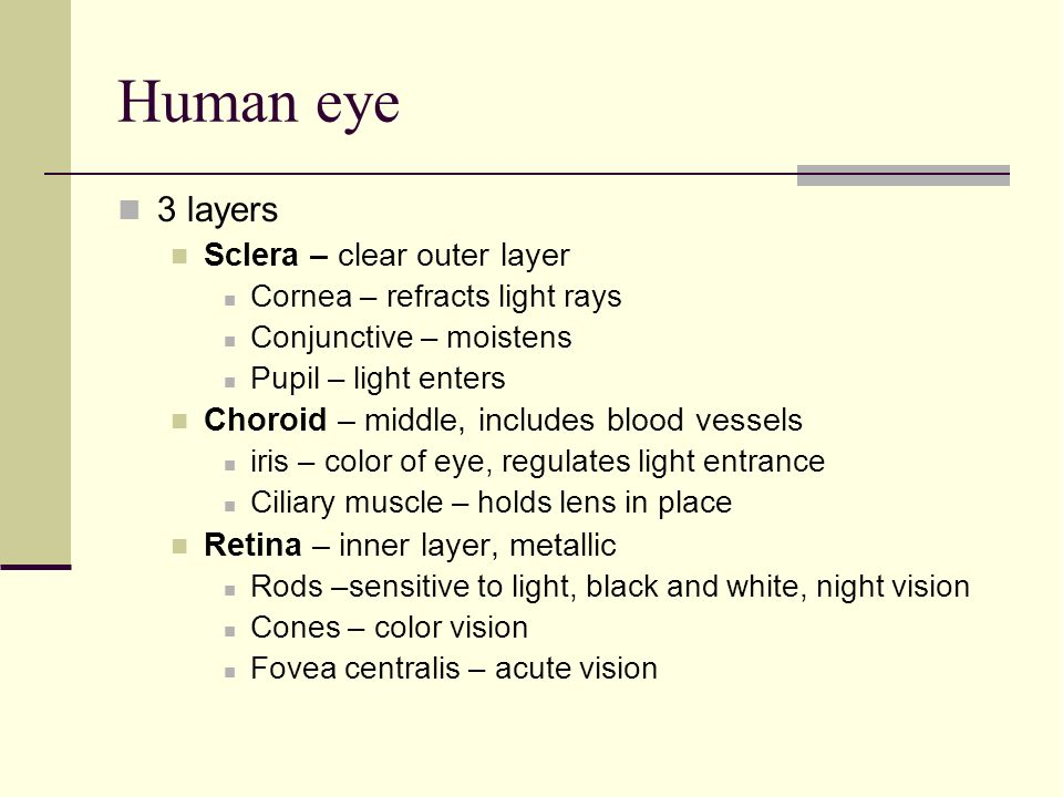 Human eye 3 layers Sclera – clear outer layer