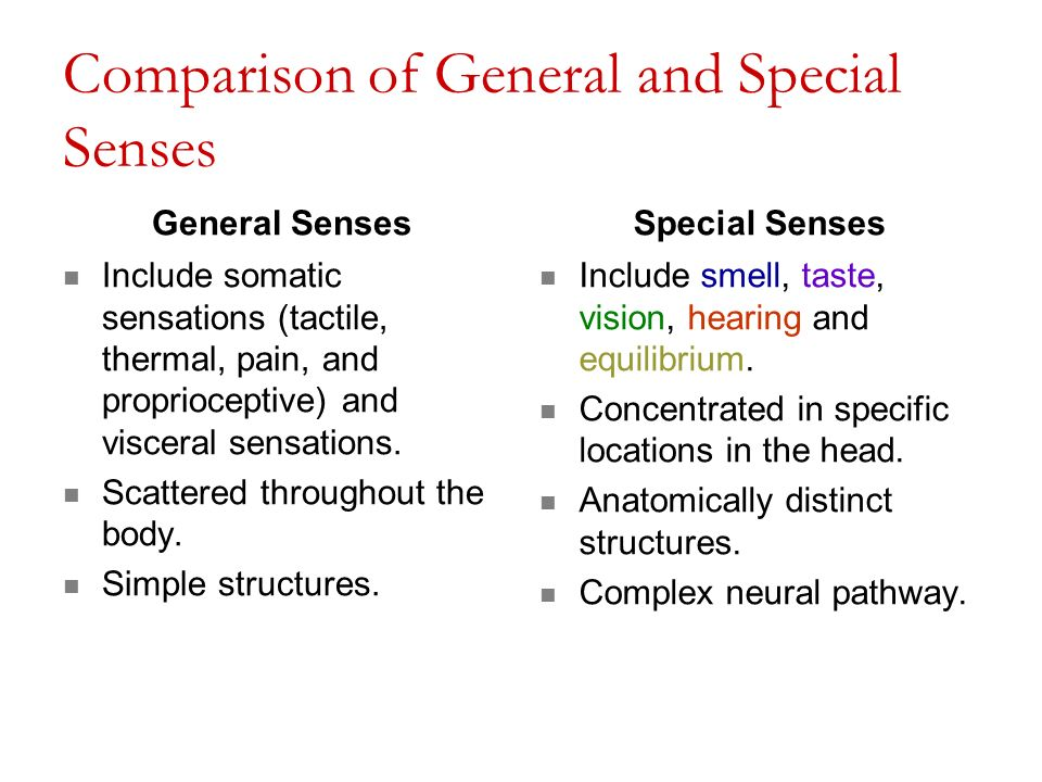 somatic and special senses