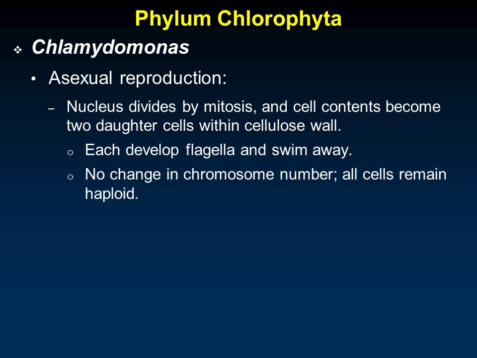 Chlamydomonas asexual reproduction video