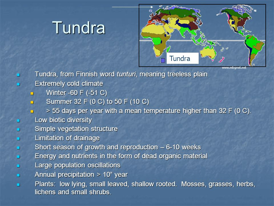 Tundra Tundra. www.mbgnet.net. Tundra, from Finnish word tunturi, meaning treeless plain. Extremely cold climate.