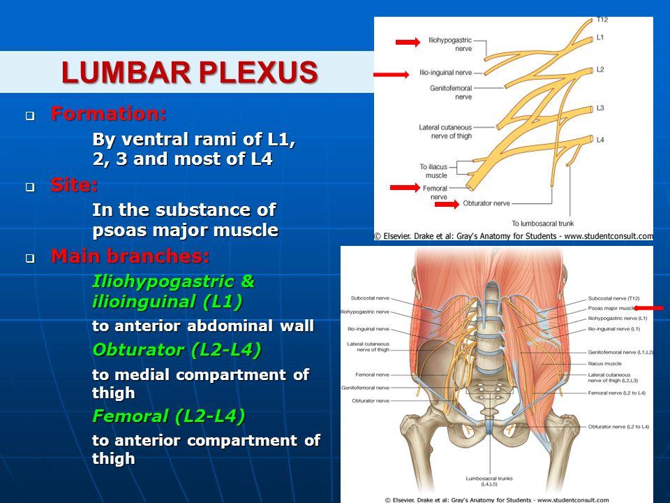 Brachial Plexus Lumbosacral Plexus Ppt Download
