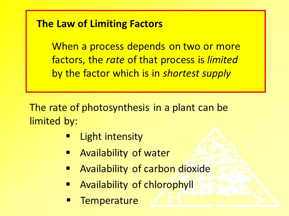 what three factors affect the rate of photosynthesis