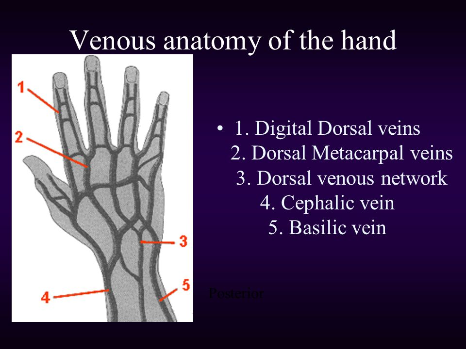 Introduction to Intravenous Access - ppt video online download