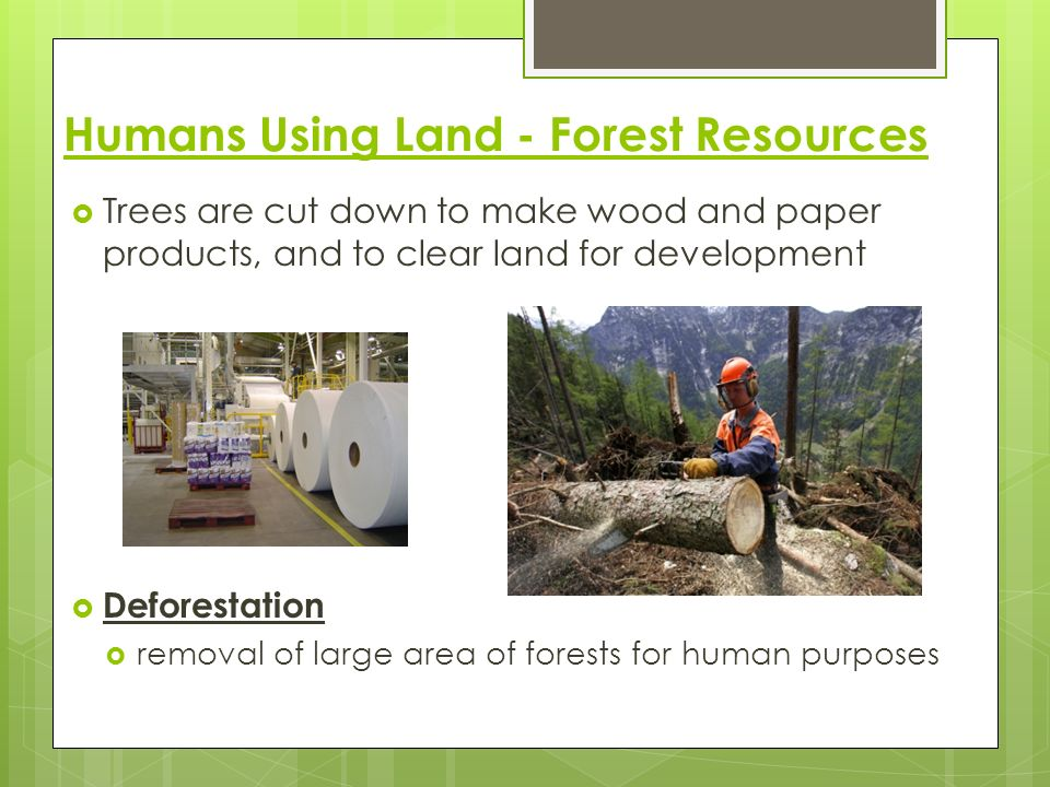 Humans Using Land - Forest Resources