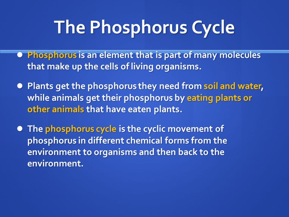 The Phosphorus Cycle Phosphorus is an element that is part of many molecules that make up the cells of living organisms.
