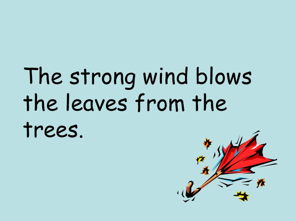 The strong wind blows the leaves from the trees.