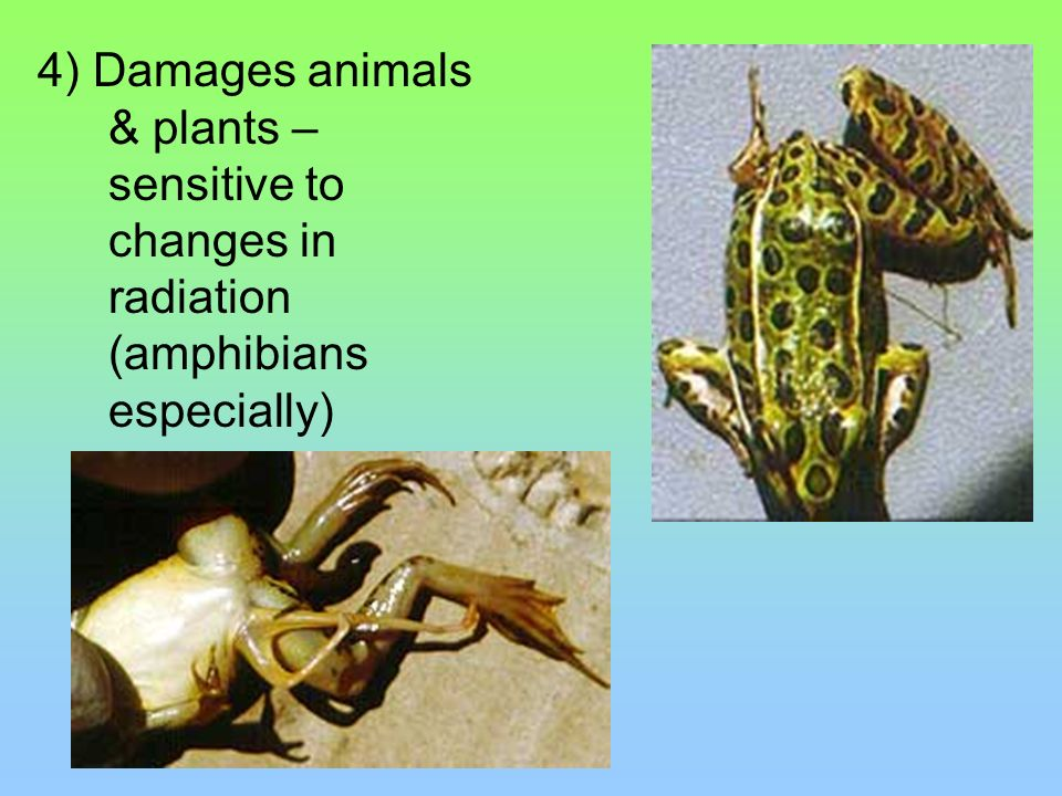 4) Damages animals & plants – sensitive to changes in radiation (amphibians especially)