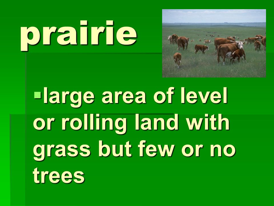 large area of level or rolling land with grass but few or no trees