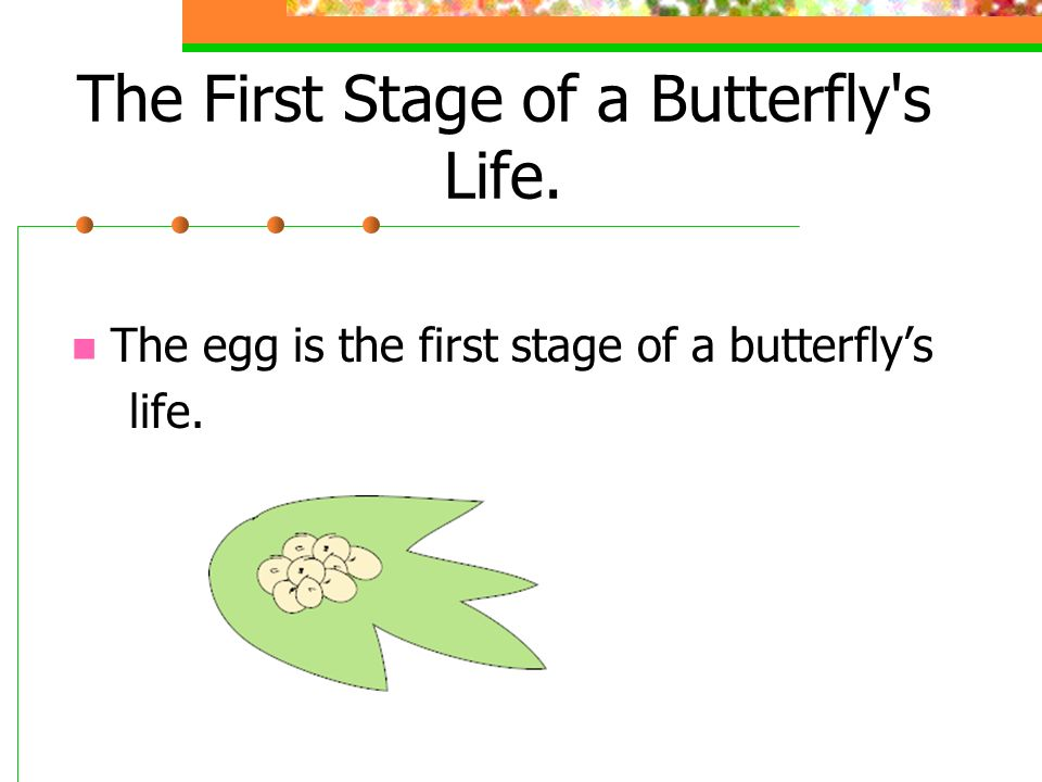 The First Stage of a Butterfly s Life.